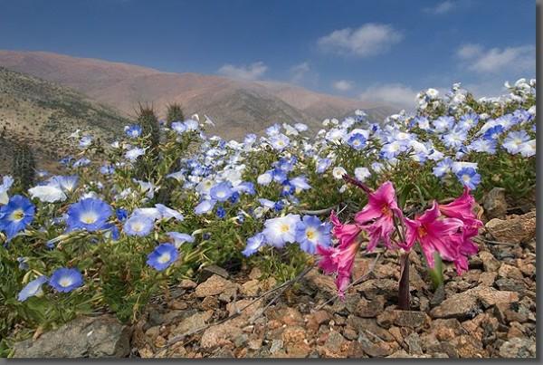 Atacama9